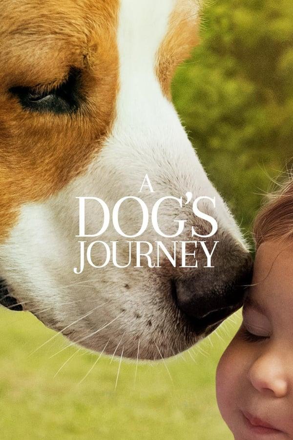 ერთი ძაღლის მოგზაურობა / A Dog's Journey