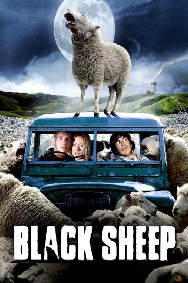 შავი ცხვარი / Black Sheep