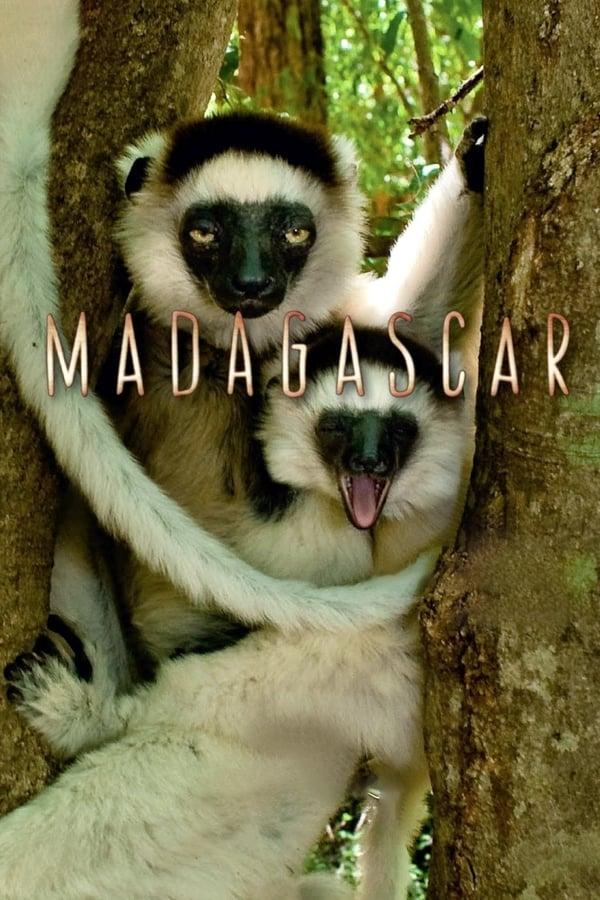 BBC: მადაგასკარი / Madagascar