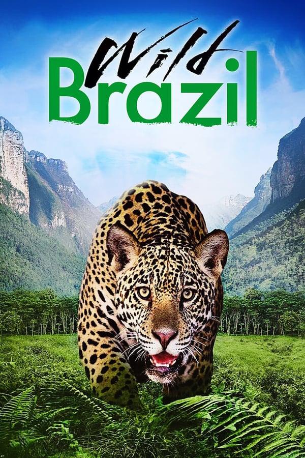 ველური ბრაზილია / Wild Brazil