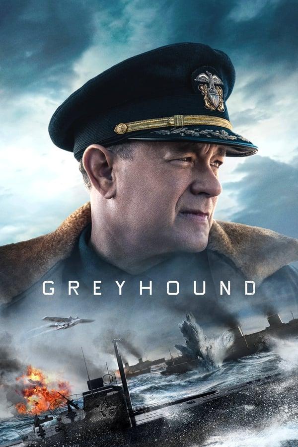 მწევარი / Greyhound