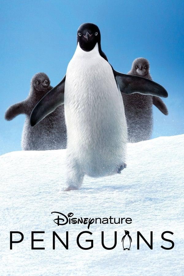 პინგვინები / Penguins