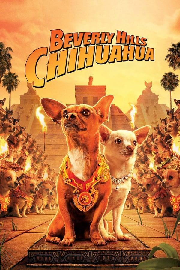 ჩიხუახუა ბევერლი –ჰილზიდან / Beverly Hills Chihuahua