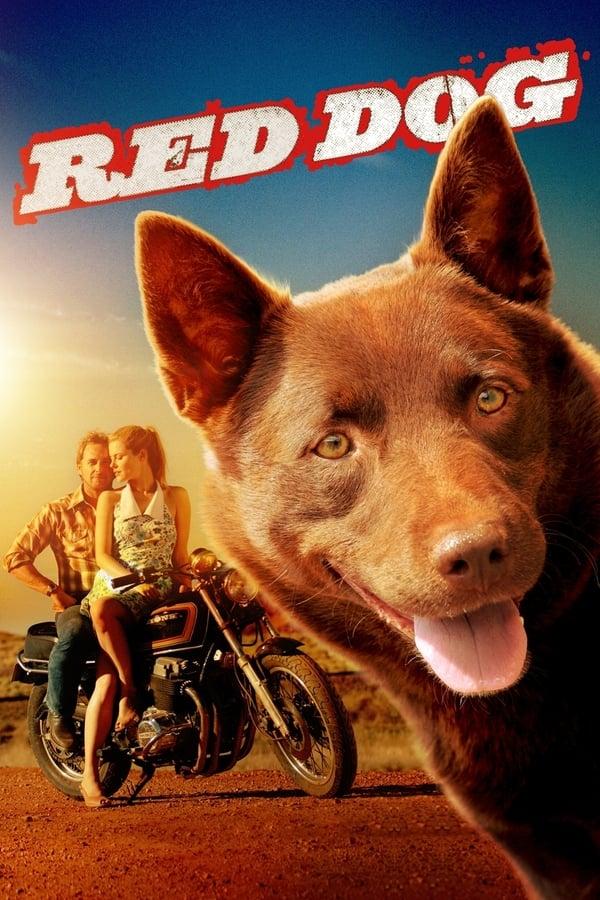 წითელი ძაღლი / Red Dog