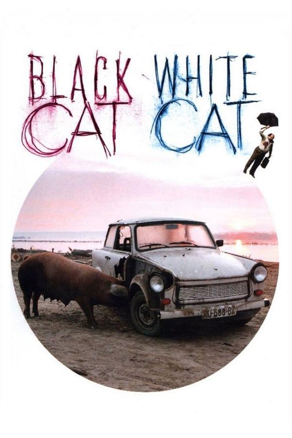 შავი კატა, თეთრი კატა / Black Cat, White Cat