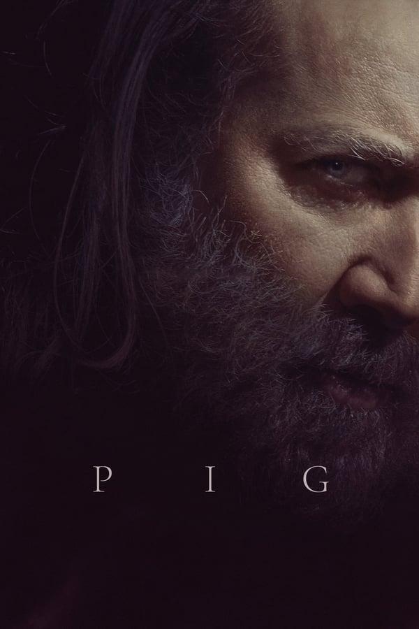 ღორი / Pig