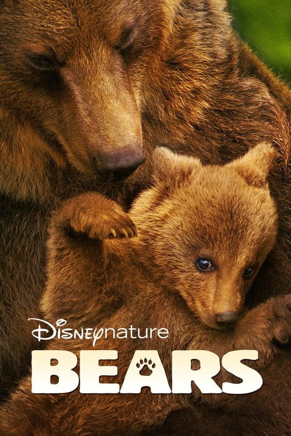 დათვები / Bears