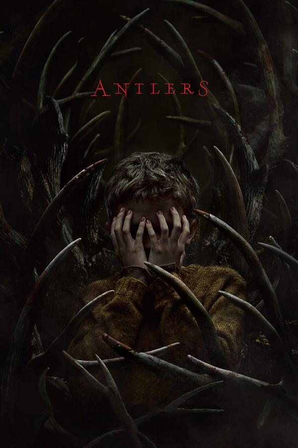 ირმის რქები / Antlers